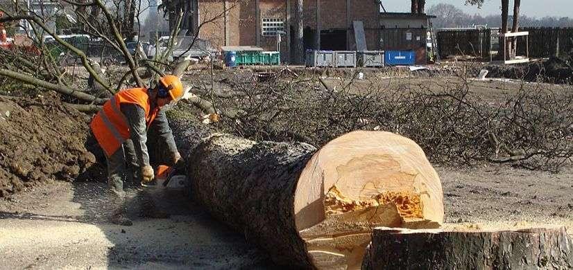 Abattage d'arbre pour entreprises