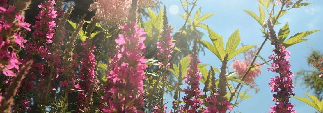 Entreprise paysagiste, fleurissement