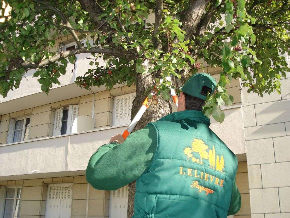 entreprise-de-jardinage-966