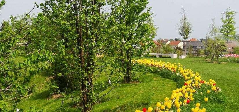 fleurissement-et-plantations-de-fleures-pour-les-espaces-d-administrations-84