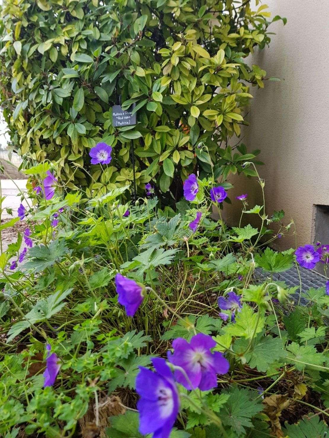travaux-de-jardinage-909