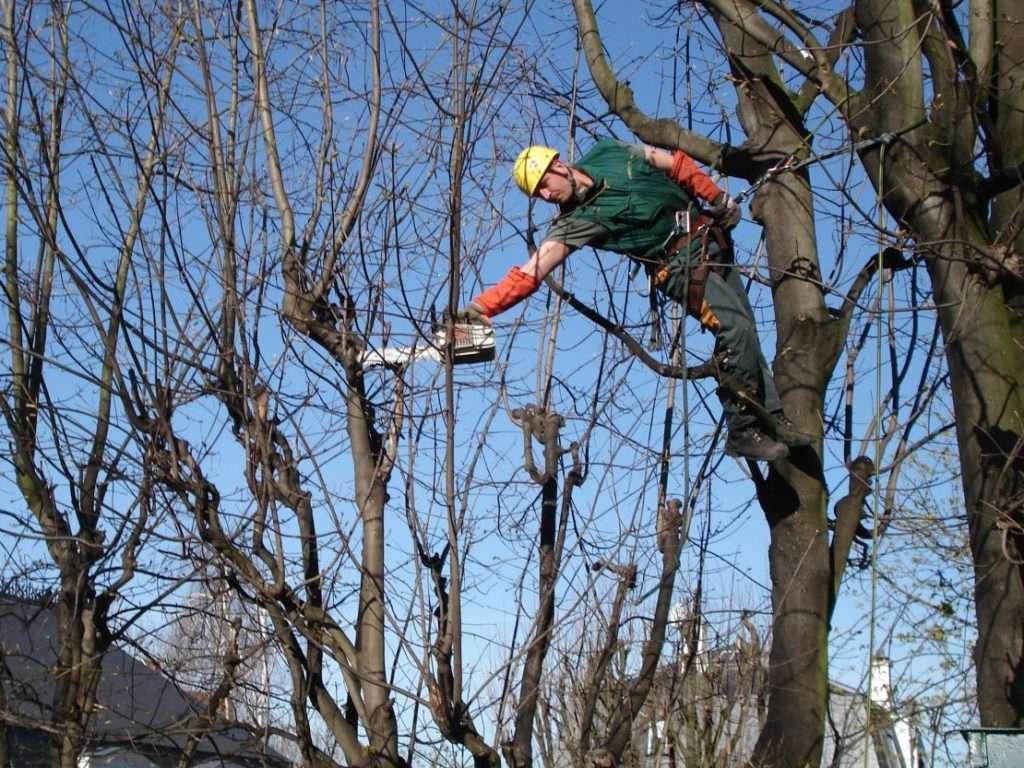 élagages des arbres